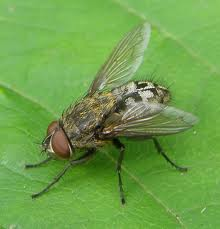 fly - cluster
